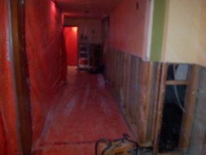 Toronto professional mould removal