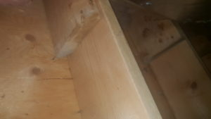Level 3 Mould Remediation – Attic roof decking